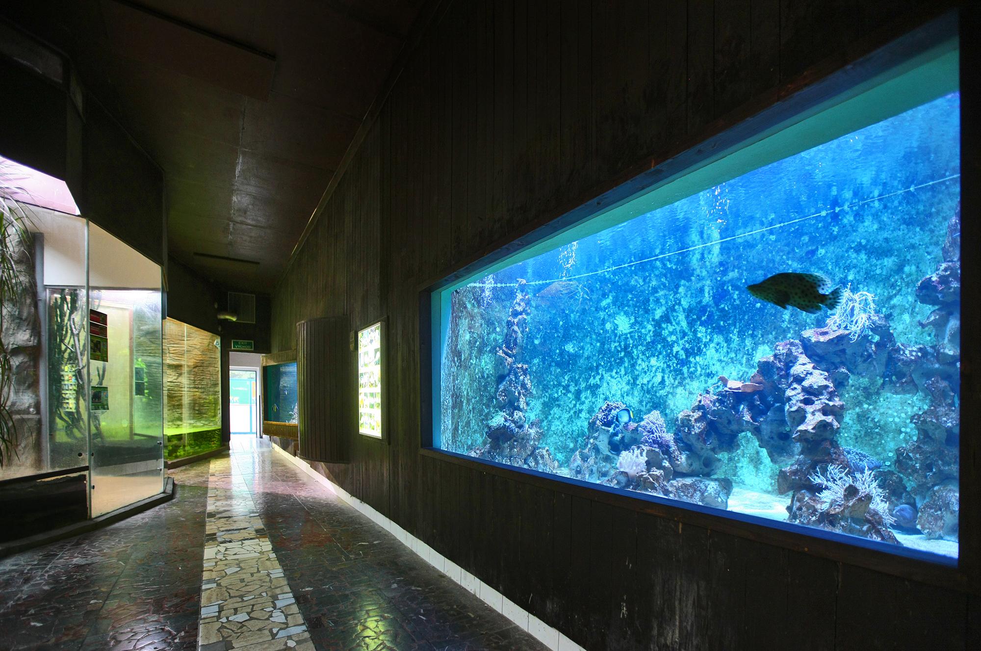 Aquarium ZOO Olomouc (7)