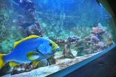 Aquarium ZOO Olomouc (8)