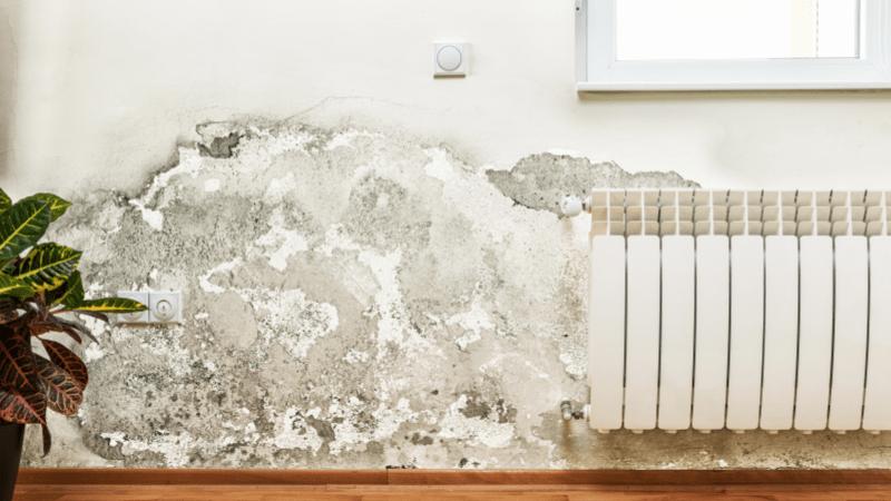 soapnut-mold-wall