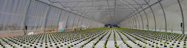 The largest hydroponics farm in Europe